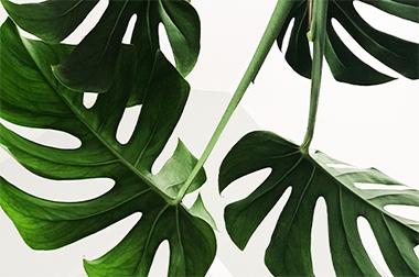 Uitgelicht groen interieur
