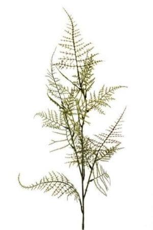 Asparagus spray - 100 cm - groen COCO MAISON FLOWERS COCO Maison Lowik Wonen & Slapen