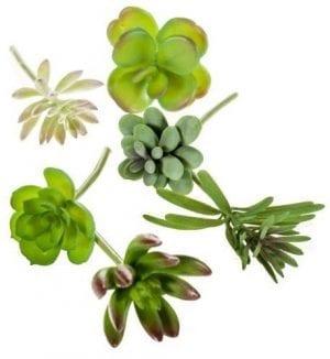 Succulent assorti - 6 stuks COCO MAISON FLOWERS COCO Maison Lowik Wonen & Slapen