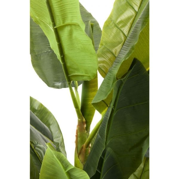 Deco Plant  Banana Tree 180cm 64003 Voorwerp: Ethyleenvinylacetaat, Basis: Polyethyleen, Voorwerp: bananenschors, Staal natuurlijk, Onderstel: Beton, Levering Gedeeltelijk gedemonteerd Kare Design