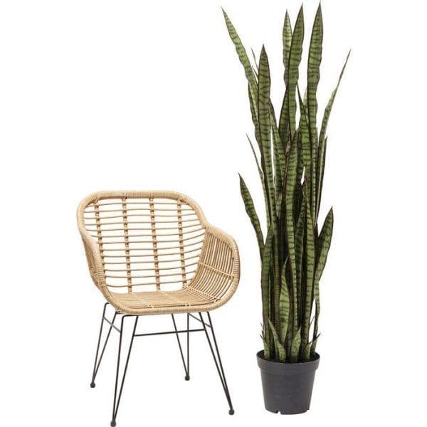 Deco Plant Sansewieria 155cm 60718 Decoratieve plant: weinig onderhoud ..... Deze decoratieve plant heeft geen water of zonlicht nodig, maar hij ziet er echt stijlvol uit en zorgt voor coole combinaties. Perfect voor ongedwongen arrangementen in ongebruikte hoeken van de kamer en overal waar u uw wens om te versieren wilt uiten. Geeft een onmiddellijke boost van frisheid voor het interieur van uw huis. Andere versies ook beschikbaar. Kare Design