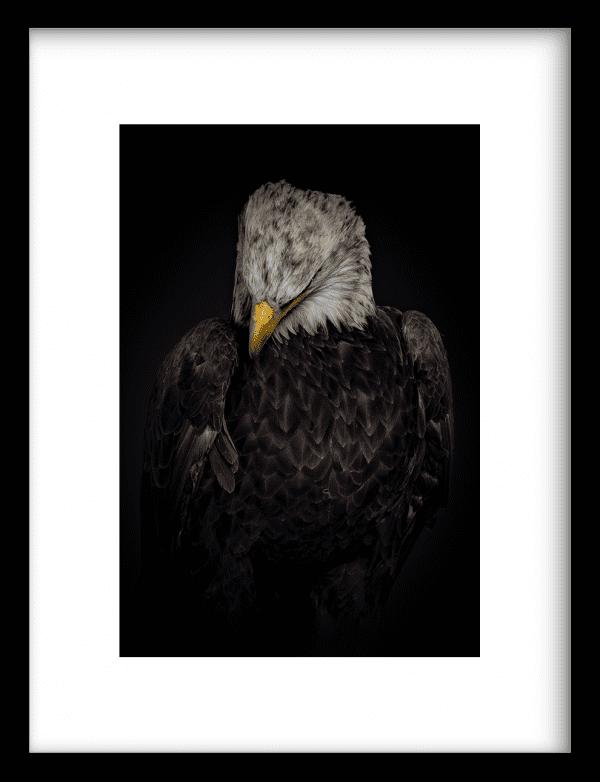 Amerikaanse zeearend wandkleed Urban Cotton, design  - Enhanced Matte Fine Art Paper