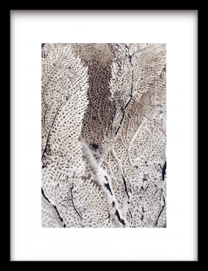 Curly soft coral wandkleed Urban Cotton, design  -  Enhanced Matte Fine Art Paper