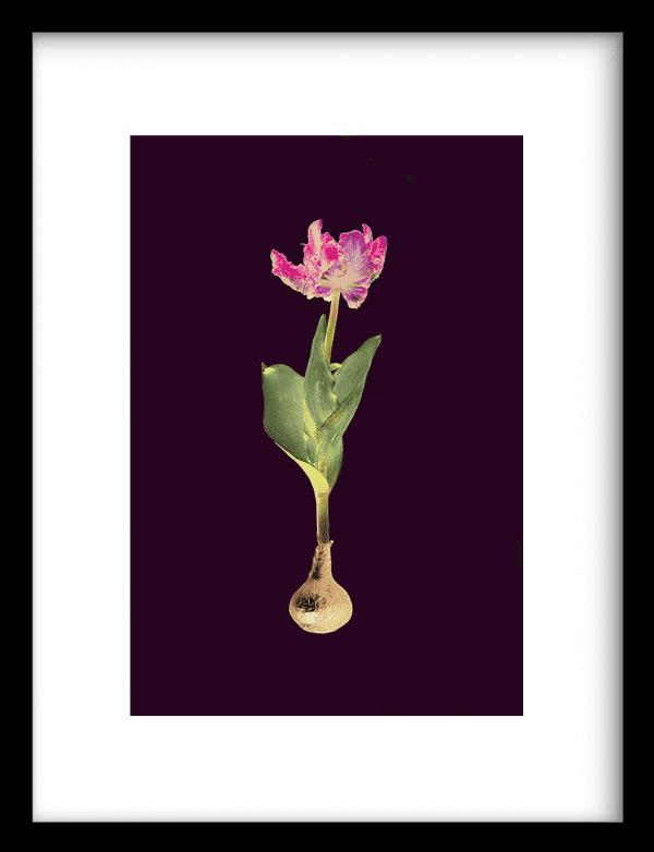 Goldenglow Pink wandkleed Urban Cotton, design  - Enhanced Matte Fine Art Paper