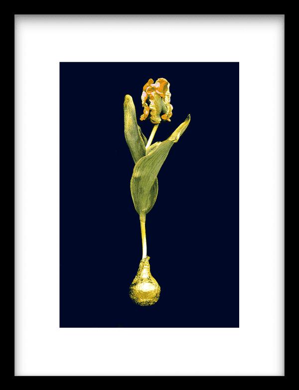 Orange Gold wandkleed Urban Cotton, design  - Enhanced Matte Fine Art Paper
