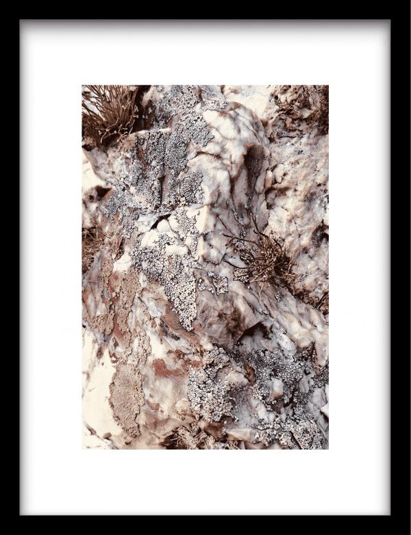 Stone plants wandkleed Urban Cotton, design  - Enhanced Matte Fine Art Paper