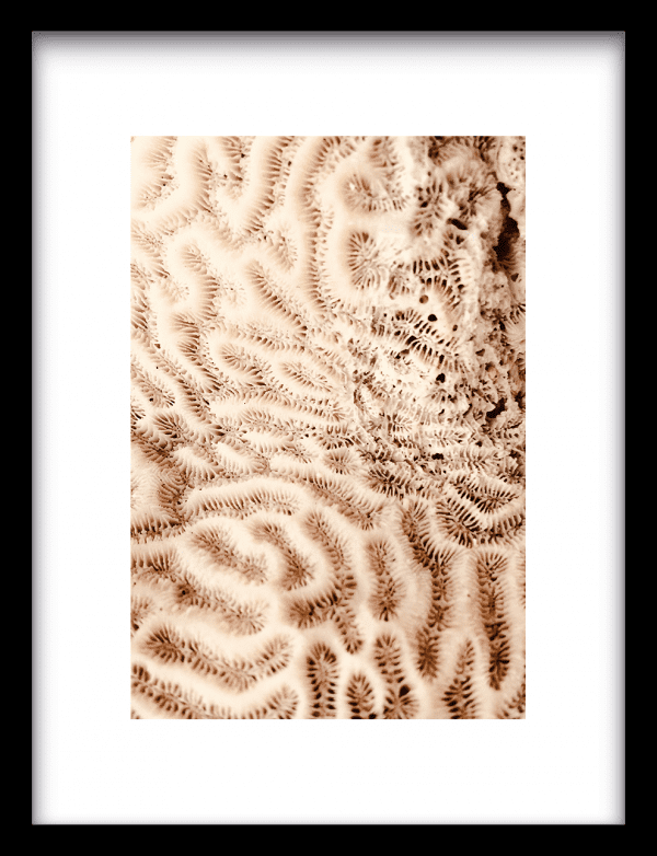 The brains of the sea wandkleed Urban Cotton, design  - Enhanced Matte Fine Art Paper