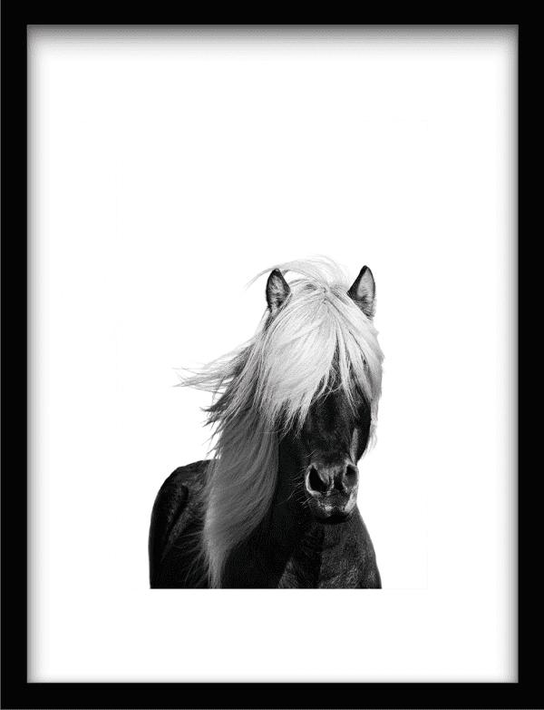 Wild Horse wandkleed Urban Cotton, design  - Enhanced Matte Fine Art Paper