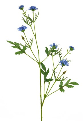 Profijt Meubel Kunstbloem Centaurea spray dk blue 92cm
