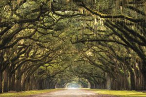 Profijt Meubel Wanddecoratie op hout 'Forest path'  Wanddecoratie