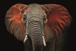 Profijt Meubel Wanddecoratie op hout 'olifant'  Wanddecoratie