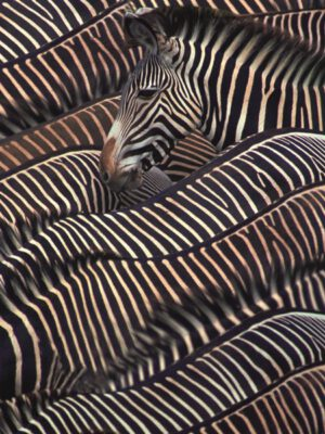 Profijt Meubel Wanddecoratie op hout 'zebra'  Wanddecoratie