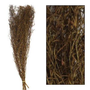 Pronto Wonen Droogbloem Chili grass  Woonaccessoire