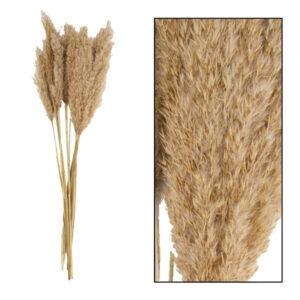 Pronto Wonen Droogbloem Plume reed long naturel  Woonaccessoire