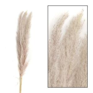 Pronto Wonen Droogbloem pampas grass mace  Woonaccessoire