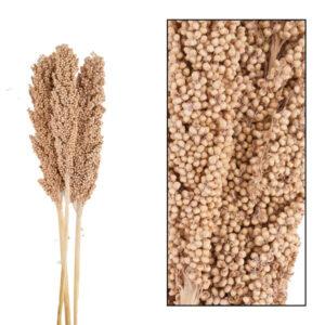 Pronto Wonen Droogbloemen indian corn  Woonaccessoire