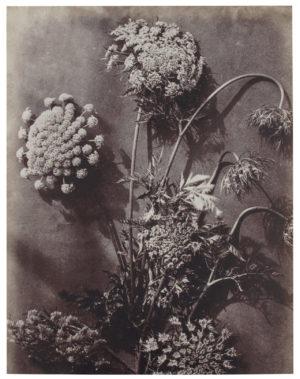 Artwork Bloemstudie 21 Grijs/beige uit de Accessoires collectie van BePureHome bij Löwik Meubelen