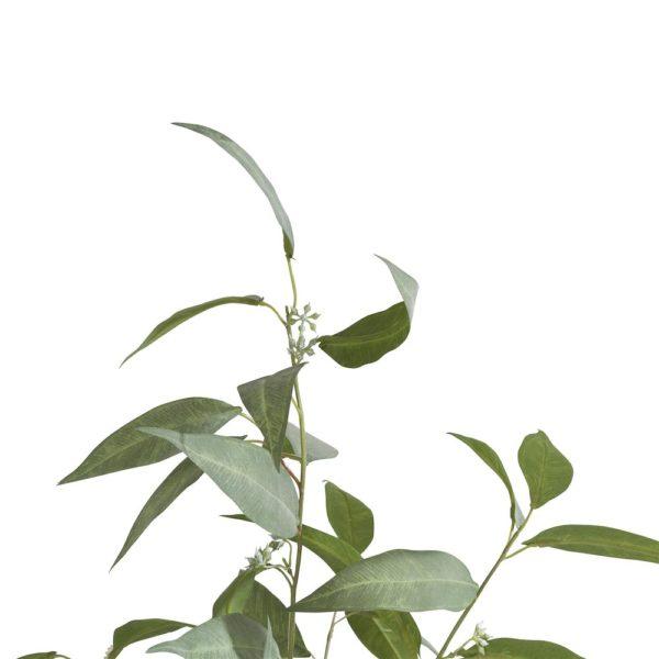 COCO maison Eucalypthus Tree plant H195cm  Kunstbloem