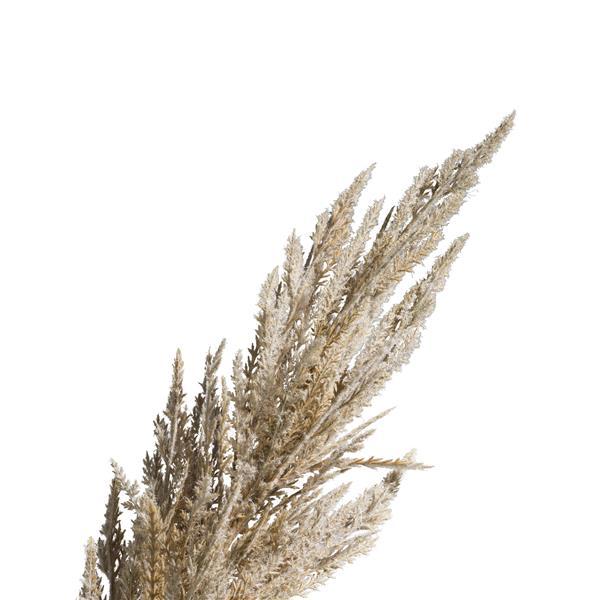 COCO maison Pampas grass spray H115cm - cremekleurig  Kunstbloem