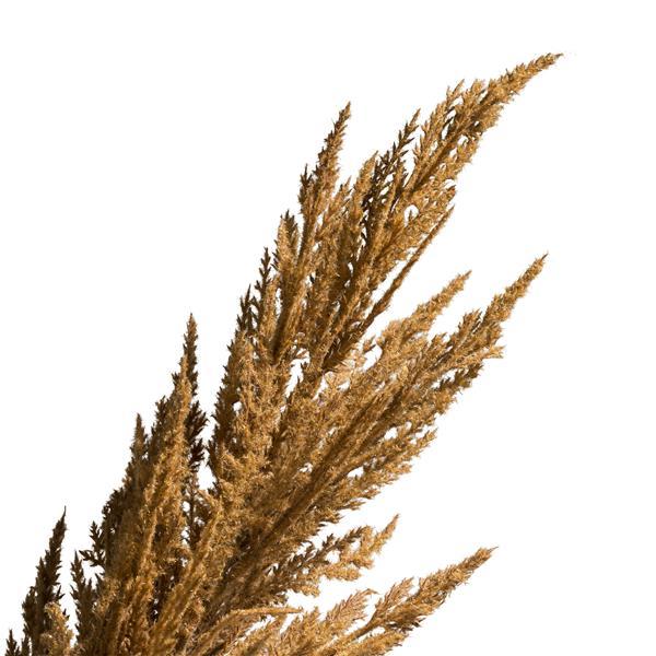 COCO maison Pampas grass spray H115cm - roest  Kunstbloem