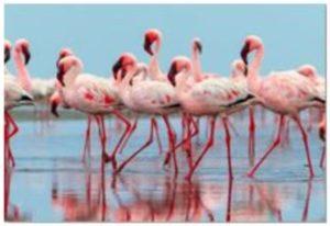Schilderij Glas Flamingo Team 120x80cm Kare Design Schilderij 53604